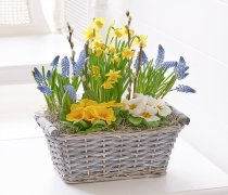 Spring Cheer Planted Basket  Code: S32801MS