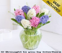 Dreamy Scented Hyacinth Vase Code: S32721MS