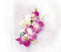 Deep Purple Orchid Corsage Code: W24011PU