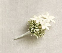 Snow White Stephanotis Buttonhole Code: W14011WH