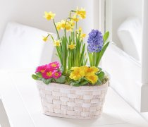 Spring Planted Basket Code: S31091MS