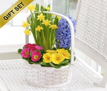 Spring Time Planted Basket with Luxury Chocolates Code: JGFS5501MBC ( Local Delivery Only )