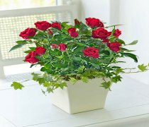 Red Rose Ceramic Planter Code: JGFC00731RS