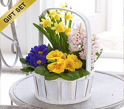 Easter flowers gifts easter gift set ideas scented spring easter flowers gifts easter gift set ideas scented spring planted basket with happy easter helium balloon and a box of milk tray chocolates code negle Choice Image