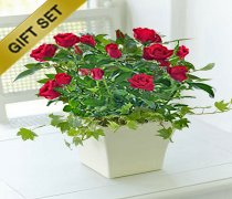 Red Rose Ceramic Planter with a Delicious bottle of Wild Orchid Merlot Wine Code JGF731RCSRW