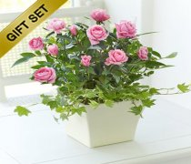 Pink Rose Ceramic Planter with a Delicious bubbly Sparkling Ros� Wine Code: JGF222PCSPSRW