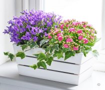 Summer Mixed Planted Basket Code: H62461MS