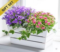 Summer Mixed Planted Basket with a box of luxury Chocolates Code: H63201MB