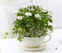 Cream Rose Teacup Code: C00511CS