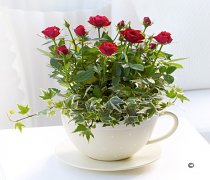 Red Rose Teacup Code: JGFR00511RP | Local Delivery Or Collect From Shop Only