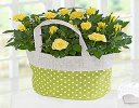 Yellow Rose Gift Bag Code JGFSP489YRPB  | Local Delivery Or Collect From Shop Only