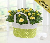Yellow Rose Gift Bag Code JGFSP489YRPB  ( Local Delivery Only )