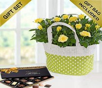 Yellow Rose Gift Bag With Hand-Made Chocolates Code JGFSP488YRPBC  ( Local Delivery Only )