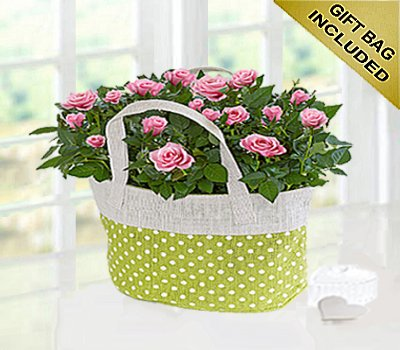 Pink Rose Gift Bag Code JGFSP589PRPB  ( Local Delivery Only )
