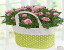 Pink Rose Gift Bag With Hand-Made Chocolates Code JGFSP689PRPB  | Local Delivery Or Collect From Shop Only