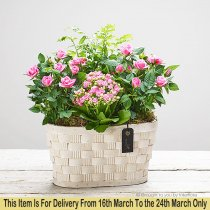 Mother's Day Mixed Planted Basket Code: JGFM51691MP ( Local Delivery Only )