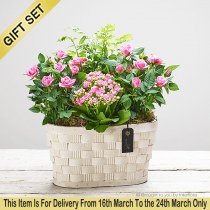 Pretty Mother's Day Planted Basket with Luxury Chocolates Code: M52771MB