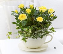 Chic Yellow Rose Teacup Code: JGF511YS  | Local Delivery Only