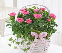 Mother's Day Pink Rose Basket Code: M52281PS