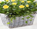 Yellow Rose Basket Code: JGF05221YS  ( Collection OR Local Delivery Only )