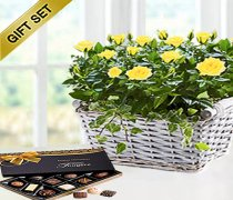 Yellow Rose Basket with Luxury Chocolates Code: JGFP05221YSC  ( Collection OR Local Delivery Only )