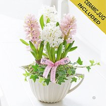 Mother's Day Hyacinth Jug Bowl  Code: JGFM52111MS  | Local Delivery Or Collect From Shop Only