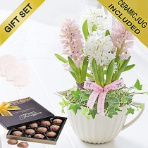 Mother's Day Hyacinth Jug Bowl with a Luxury Box of Milk Chocolate Truffles  Code: JGFM52111MSMCT  ( Local Delivery Only )