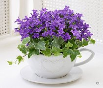 Purple Campanula Teacup Code: JGFS62441TC  | Local Delivery Or Collect From Shop Only