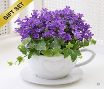 Purple Campanula Teacup with a Box of Luxury Chocolates Code: JGFH62441MSC