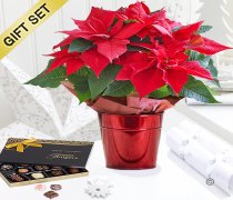 Crimson Poinsettia Star Tin with a box of Luxury Belgian Chocolates Code: X90601RS-C  | National and Local Delivery