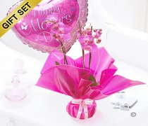 Mother's Day Pink Phalaenopsis Orchid Plant with a Happy Mother's Day Balloon Code: JGFM1454POP-B | Local Delivery Or Collect From Shop Only