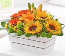 Lily, Germini and Sunflower Arrangement Code: H63141MS