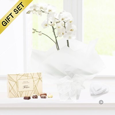 White Phalaenopsis Orchid Plant with a box of Luxury Belgian Chocolates Code: JGF1464WOP-C | Local Delivery Or Collect From Shop Only