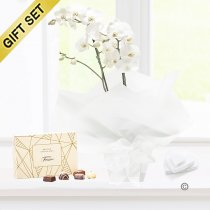 White Phalaenopsis Orchid Plant with a box of Luxury Chocolates Code: JGF1464POWC ( Local Delivery Only )