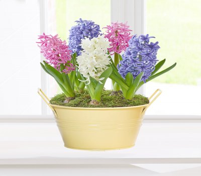 Spring Hyacinth Cream Planter Code: JGFS64646SM ( Collection OR Local Delivery Only )