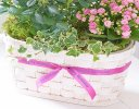 Happy Birthday Mixed Planted Basket Code: C09491MS