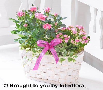 Happy Birthday Pink Rose and Kalanchoe Basket Code: C09521MS