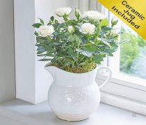 Country Style Cream Rose Jug Code: C08791CS