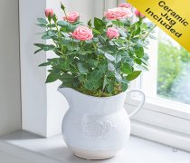 Country Style Pink Rose Jug Code: C08791PS