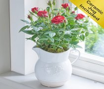 Country Style Red Rose Jug Code: C08791RS