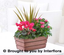 Rosy Pink Autumn Planter Code: A72201MS