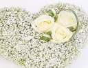 Gypsophila Heart Code: F13791WS | National and Local Delivery