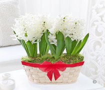 White Hyacinth Basket Code:JGFW62545HB | Local Delivery Or Collect From Shop Only