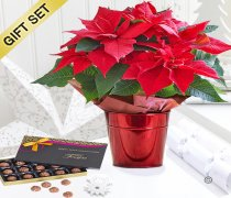 Crimson Poinsettia Star Tin with A Box Of Luxury Salted Caramel Chocolate Truffles Code: X90601RS-SCT | National and Local Delivery