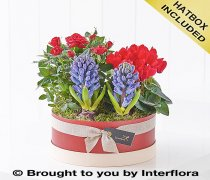 Scented Christmas Hatbox Planter Code: X89671MS