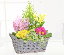 Large Spring Planter Basket Pink Code: JGF33274SPP | Local Delivery Or Collect From Shop Only