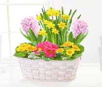 Joyful Spring Basket Code: JGFS32332PY | Local Delivery Or Collect From Shop Only