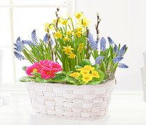 Spring Cheerful Planted Basket Code:JGFS795148GH