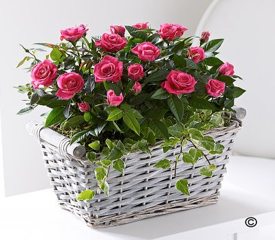 Pink Rose Basket Code: JGFC05221PS Local Delivery Only