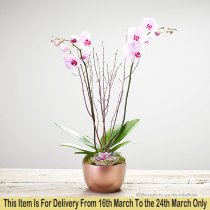 Mother's Day Orchid Code: M53221PS